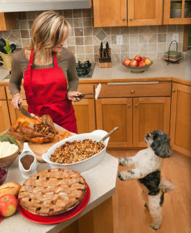 Pancreatitis – What Most Vets Will Treat on the Friday after Thanksgiving