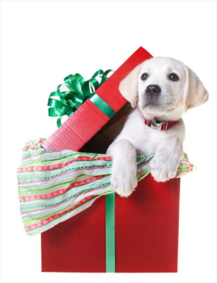 Giving Pets as Gifts