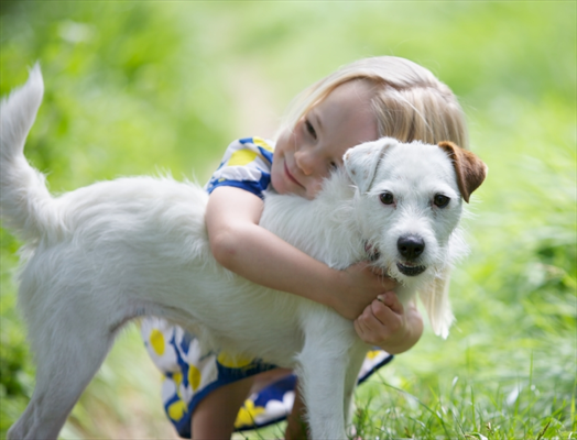 Common over the counter human remedies can be harmful to pets