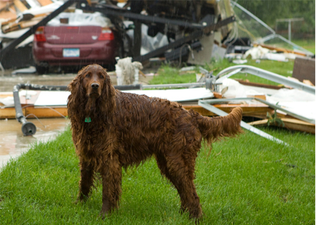 Emergency preparedness and pets