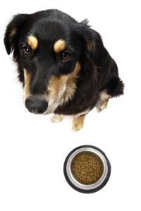 Salmonella and Pet Food - Understand the Risks